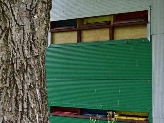Lesníci a včelári oživia chov včiel v lesoch