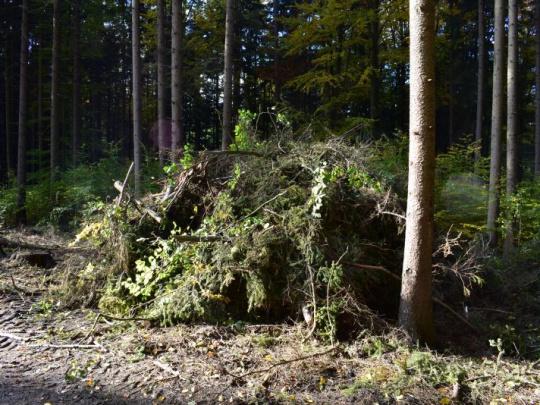 Žaloba aktivistov zamietnutá, drevná biomasa je obnoviteľným zdrojom energie