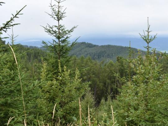 Chránené budú aj jaseňovo-jelšové podhorské lesy