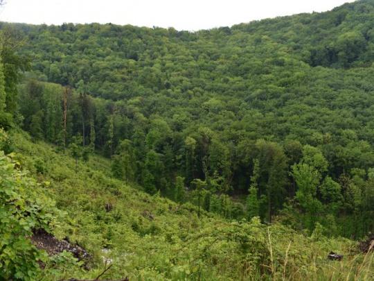 Pozor, aktivácia elektronických schránok sa týka aj lesomajiteľov