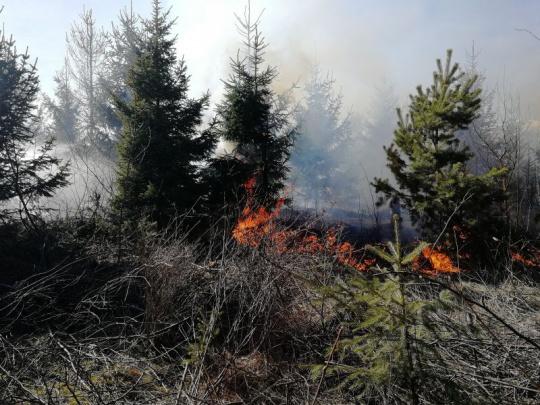 V lesoch riziko požiarov. Ich vlastníci a obhospodarovatelia musia hliadkovať a plniť si aj ďalšie povinnosti