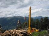 Zisk lesného hospodárstva klesol