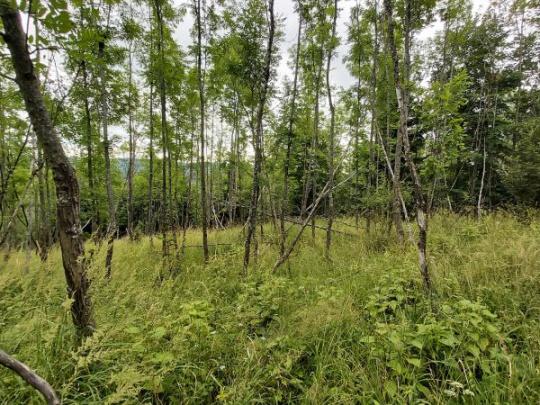 NLC: Kontrolný deň k riešeniu problematiky plánovania hospodárskych opatrení v odumierajúcich porastoch jaseňa štíhleho