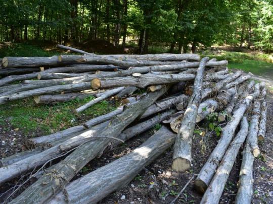 Separujú drevný odpad