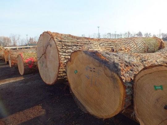 O aktuálne elektronické aukcie dreva v štátnom podniku LESY SR má záujem 155 dražiteľov