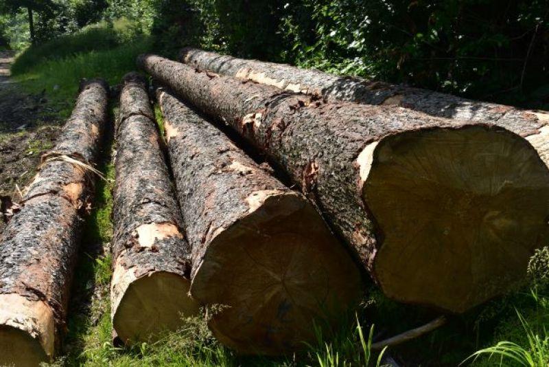 Zväz spracovateľov dreva SR: Opatrný optimizmus – diabol sa ukrýva v detailoch