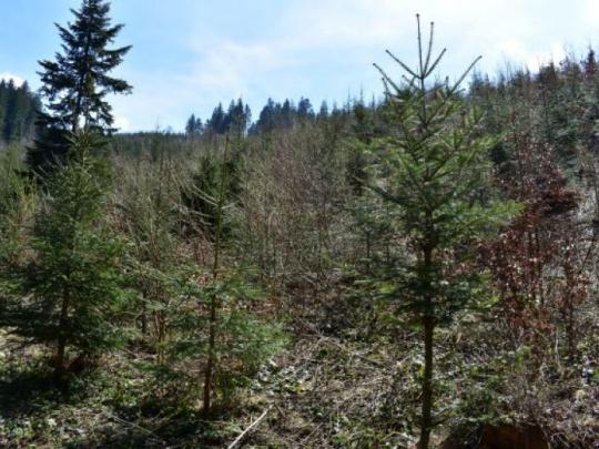 Minister pôdohospodárstva Českej republiky: Meníme druhovú skladbu lesov – budú pestrejšie, zdravšie a odolnejšie