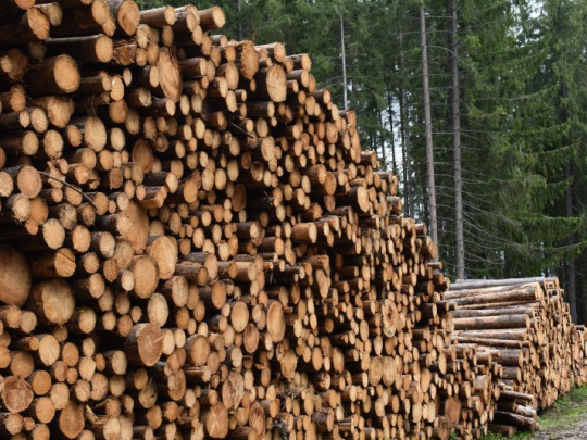 Glosa: Prezradené verejné tajomstvo štátnych lesov. A čo ďalej?