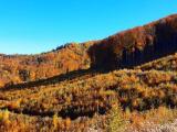 Štátny lesník opísal výsledky lesníckej práce malého urbáru: Na obnovených kalamitných plochách niekoľkometrové mladiny s pestrým drevinovým zložením