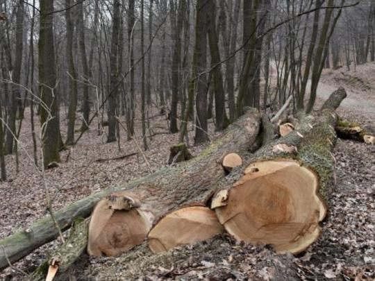 Viedeň postaví tisícky bytov v drevostavbách: Drevo vníma ako dostupnú domácu prírodnú surovinu