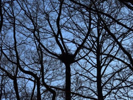 Slovenskí ornitológovia poskočili vyššie v európskom rankingu: Príroda je u nás veľmi pestrá