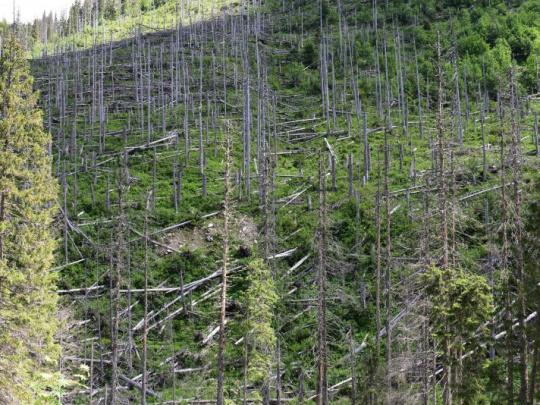 Vedci o bezprecedentnej kalamite v strednej Európe: Bezzásahové územia sú ešte po 15 rokoch zdrojom oxidu uhličitého, obhospodarované plochy už uhlík viažu