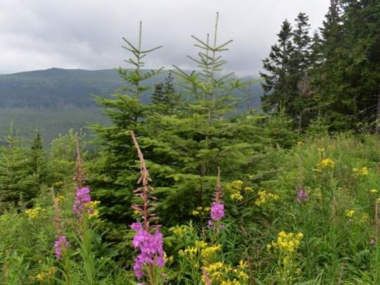 Vlastníci lesov v ČR: Návrh Stratégie EÚ pre lesy je nevyvážený. Jedinou našou istotou je neistota