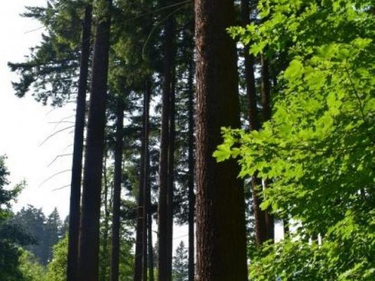 Národné lesnícke centrum: Každé tri sekundy prirastie v slovenských lesoch jeden kubický meter dreva
