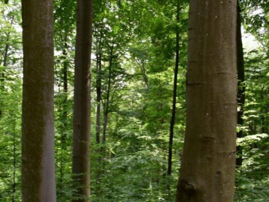 Názor: Odpočet ochrany prírody a odkaz pre tých, ktorí zvažujú predaj lesného majetku štátu – zradíte ideály predkov a znevážite ich odriekanie