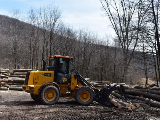 Mýtus: Ťažíme priveľa dreva. Fakt: Rúbeme menej, ako by sme mohli