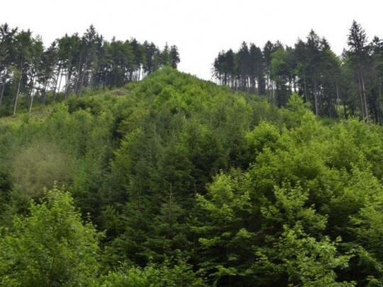 Boj o využívanie lesov v Nemecku: Vlastníci lesov odmietajú požiadavky ochrancov prírody, pretože by viedli k výraznému zvýšeniu dovozu dreva